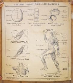 Carte scolaire murale vintage anatomique