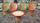 Ensemble de jardin bambou et coton tressé vintage années 60